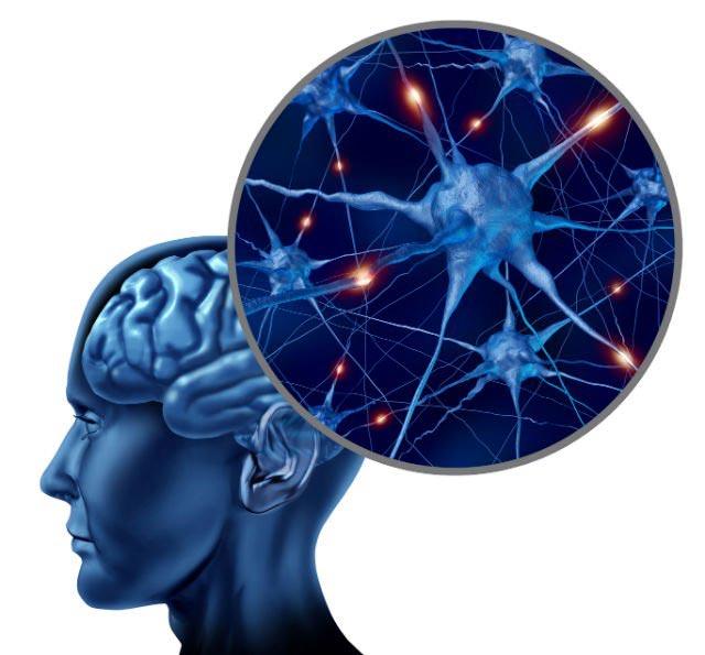 عصبهای مغز